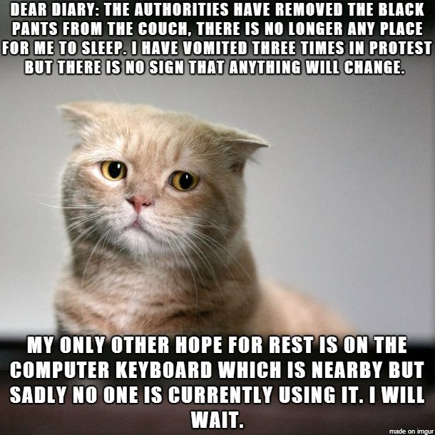 Cat diaries. Hilarious! Love cats!
