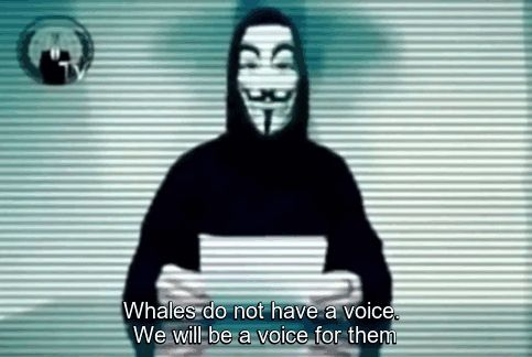 [Trending] This Country Kills Whales So Anonymous Hackers Shut Down Its Governments Websites