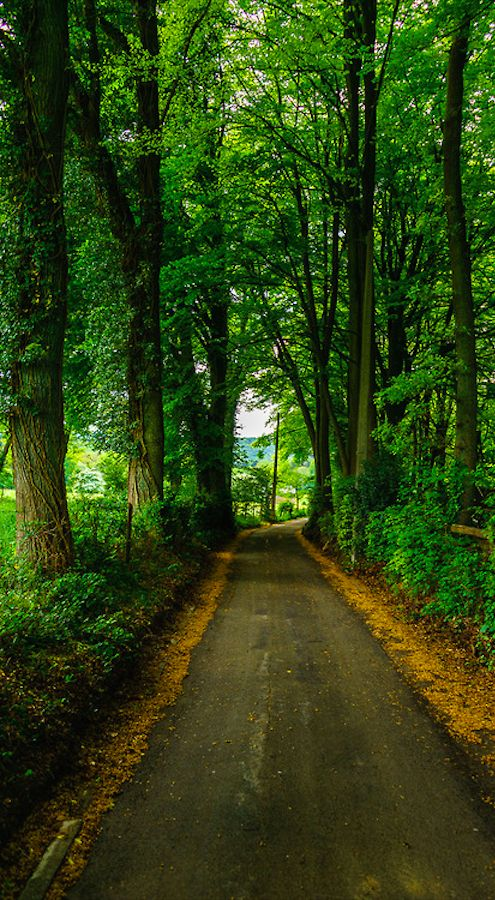 Canopy of trees over a country road in Tilff of Esneux near Liege, Belgium • photo: Falcdragon on Flickr