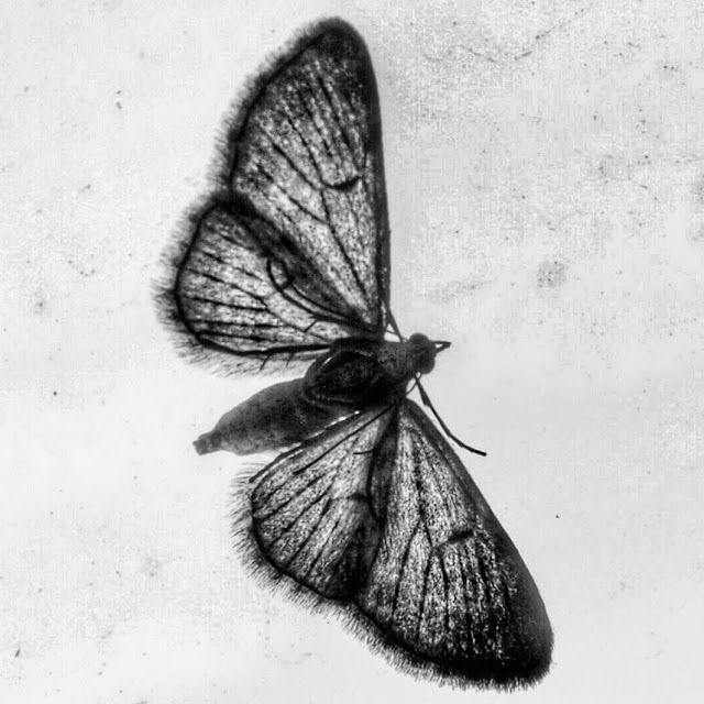 Fotograficznie i subiektywnie: mothman prophecies