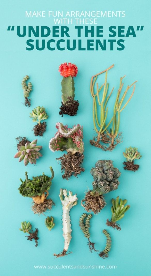 Oh my goodness! These succulents really look like they came from under the sea!