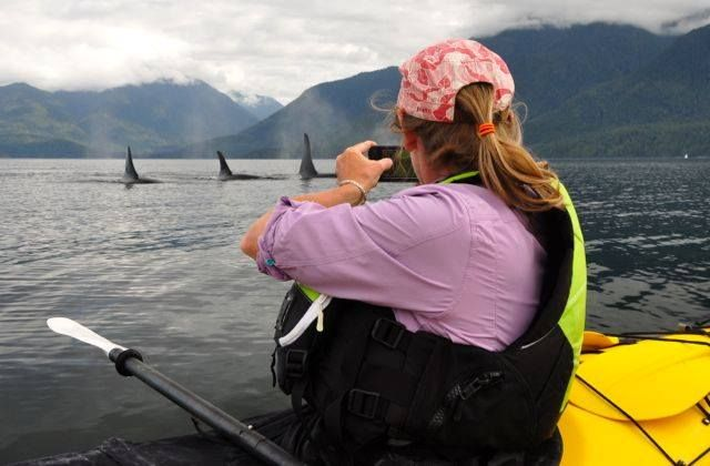 There are many rewards at Orca Camp - having the privilege of seeing Orcas in their wild, untamed habitat is only one of them.