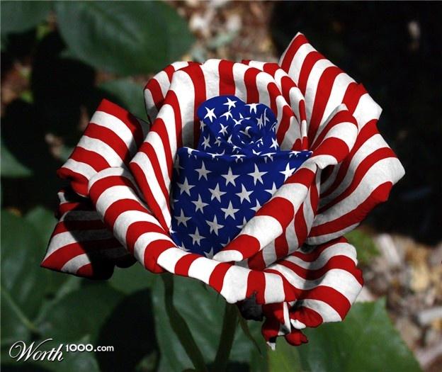 Patriotic Rose