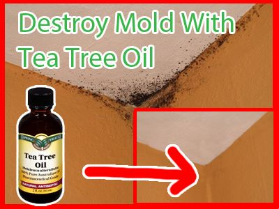 How To Naturally Remove Mold