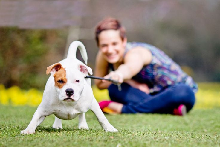"""How to practice """"Nothing in Life is Free"""": Dog training tips"""