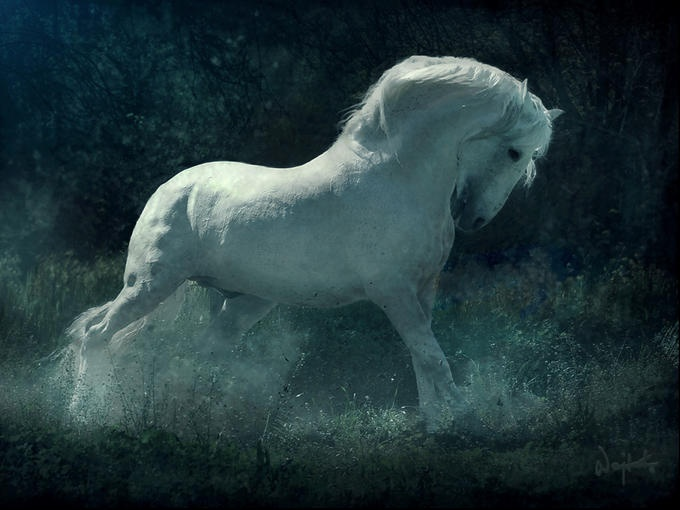 Andalusians <3: Kwiatkowski Photography, Equine Photography, Animal Art, Beautiful Hors, Dreams Horseandalusian, Art Photography, Amazing Hors, Wojtek Kwiatkowski, White Hors