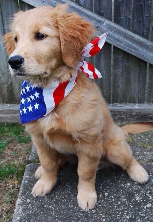 if you call me up in 10 years and i dont have this dog there is something wrong