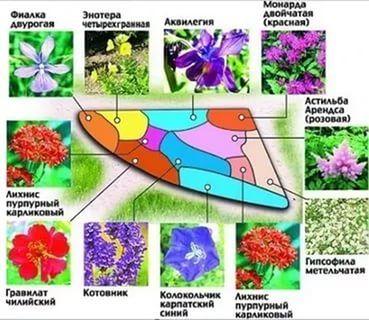 цветники из многолетников своими руками схемы: 20 тыс изображений найдено в Яндекс.Картинках
