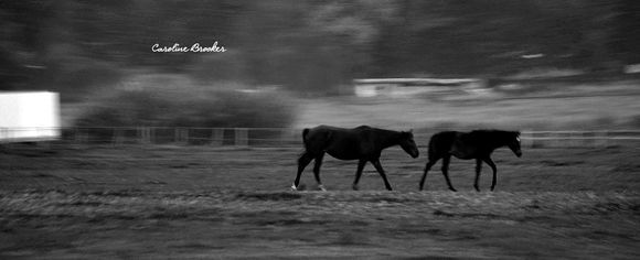 Black & White Landscape of Horses- Caroline Brooker