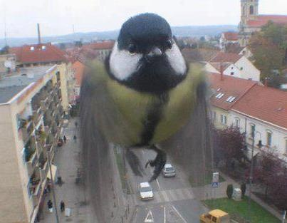 A webcam in Szentgotthárd, Hungary captured this curious bird looking into the camera. The webcam is set to shoot only one frame in every minute, how serendipitous!