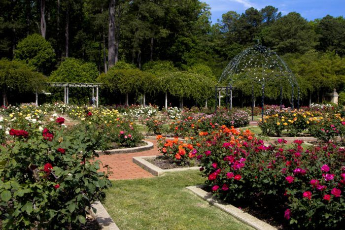 The Southern C(ity) Guide | Birmingham. Caroline Bramlett enjoys spending the afternoon taking in the beauty of the rose garden at Birmingham Botanical Gardens.