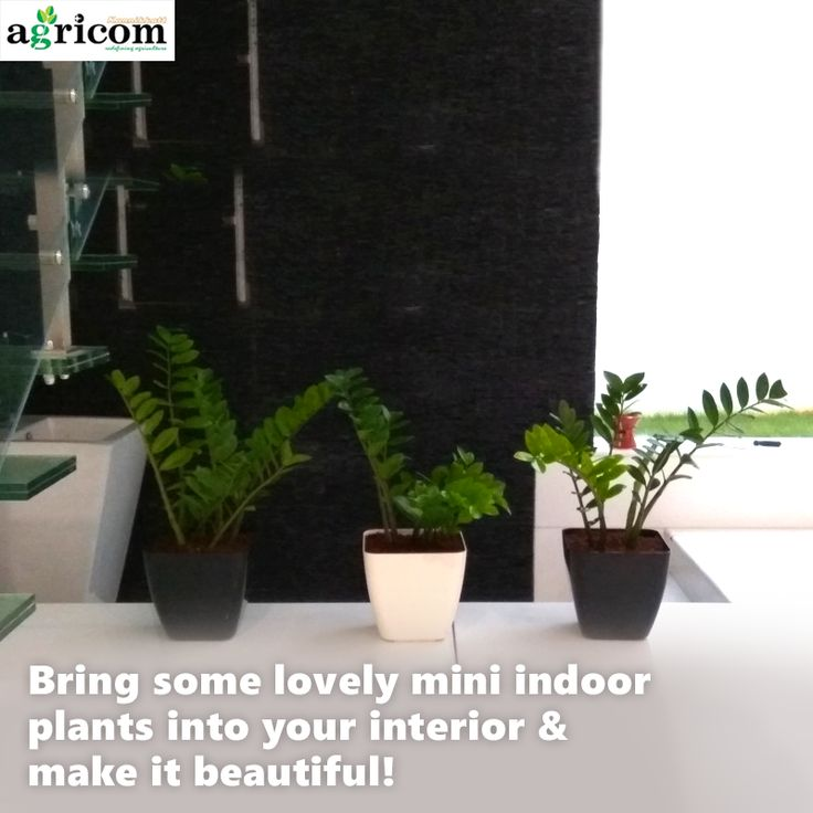 83 best Indoor Outdoor Garden Design and Maintanance images on