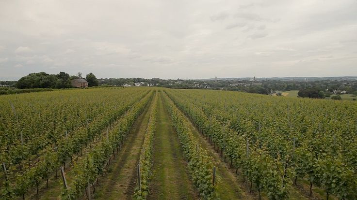 Winery Apostelhoeve, the oldest commercial vineyard in the Netherlands is located in the south of the Netherlands, in the province of Limburg.