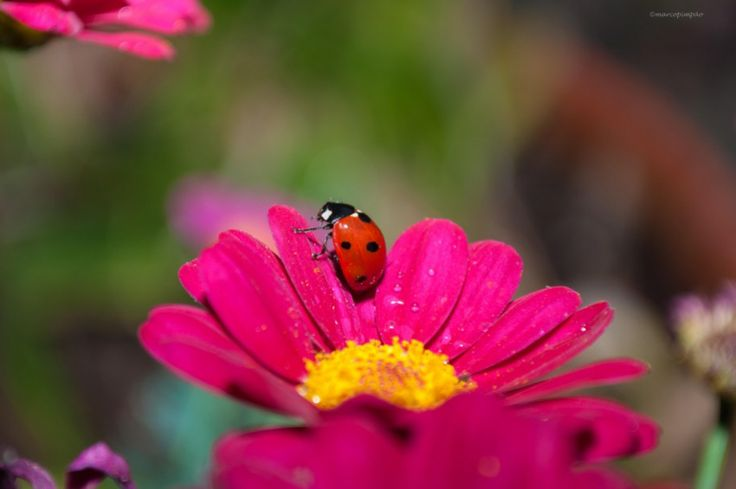 Ladybug being harassed by a papparazzo http://mpimpao.com