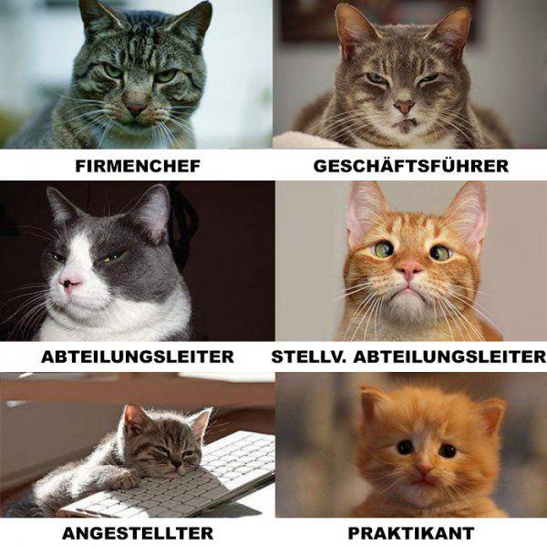 Katzen als Spiegelbild unserer Arbeitswelt