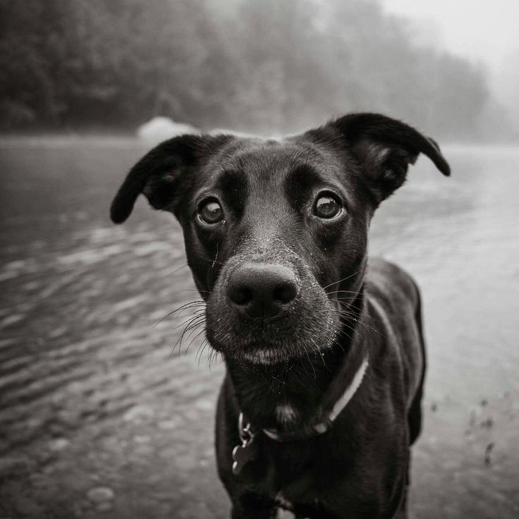 Lucy the Whippador at the river.. Whippet lab mix, looks just like our Cami.
