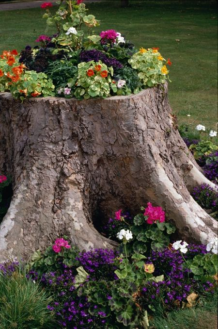 Tree stump upcycled into a flower bed
