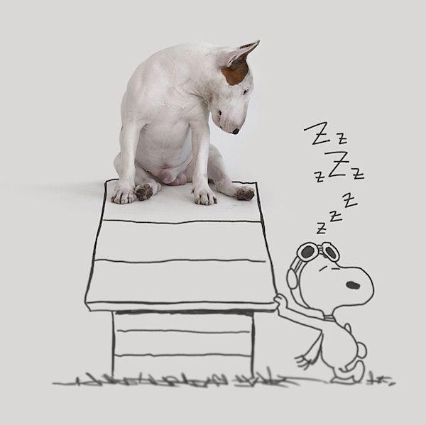 Die Geschichte des brasilianischen Illustratoren und Fotografen Rafael Mantesso haben wir Euch bereits im vergangenen Sommer an dieser Stelle erzählt. Ausgerechnet an seinem dreißigsten Geburtstag wurde der Mann aus São Paulo bekanntlich von seiner Frau verlassen, behielt neben einem von sämtlichen Einrichtungsstücken befreitem Haus, lediglich den gemeinsamen Bull Terrier Jimmy Choo. Um sich etwas vom Trennungsschmerz abzulenken stürzte sich Mantesso... Weiterlesen
