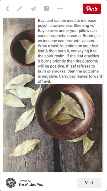 Herbal Magick | Spellwork - Bay Leaf