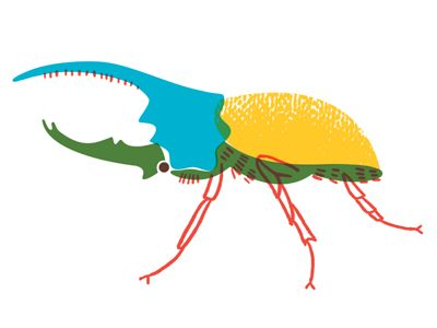 Hercules Beetle by Brad Woodard