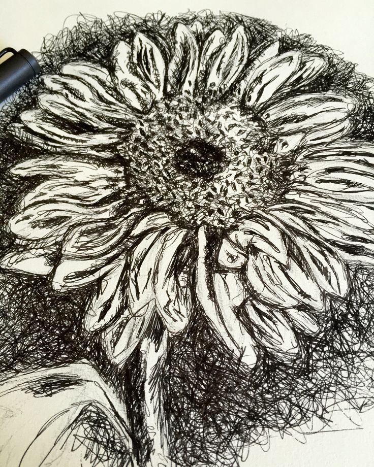 Drawing a sunflower #drawing #sunflower