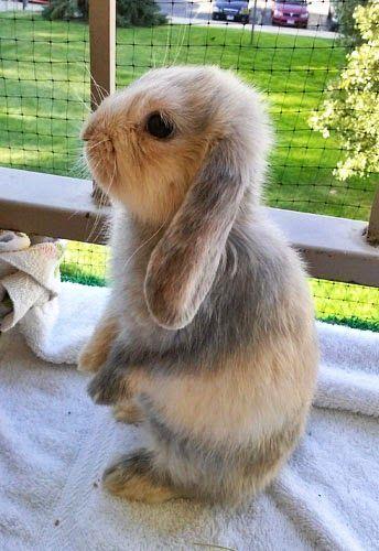 Bunny rabbit!