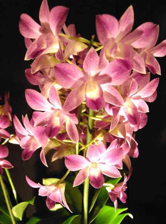 très belle photo d'une très belle fleur