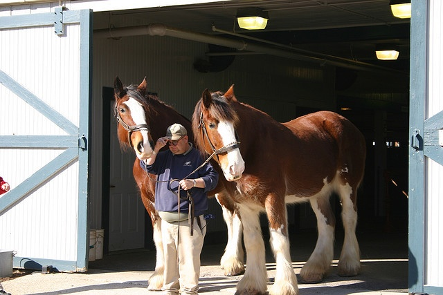 Clydesdales at Kentucky Horse Park, Paris Kentucky
