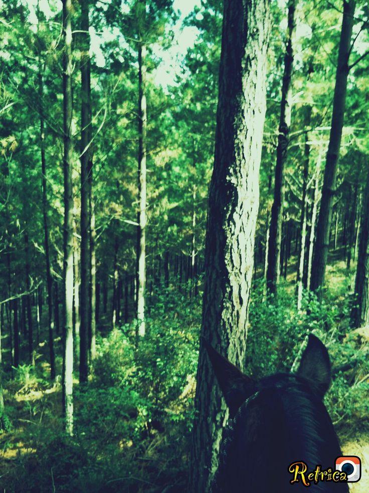 Woods on my horse