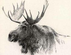 magnificent moose |