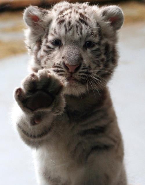 high five!   Super-cute Animal Pics   Pinterest