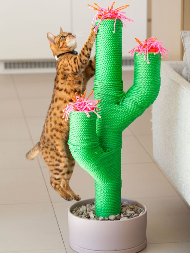High 5 enjoyable and quirky pet equipment for the house