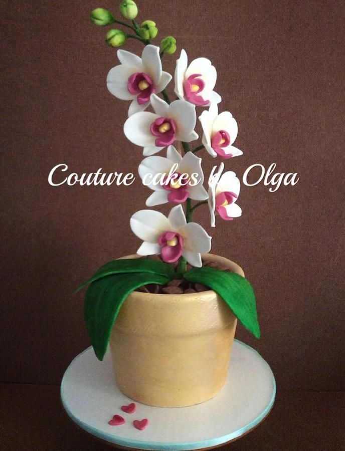 Orchids in a flower pot - Cake by Couturecakesbyolga