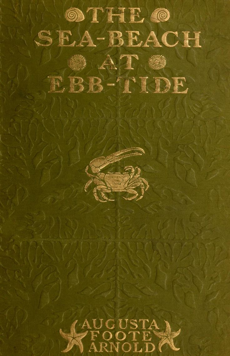 'the Seabeach At Ebbtide' By Augusta Foote Arnold The