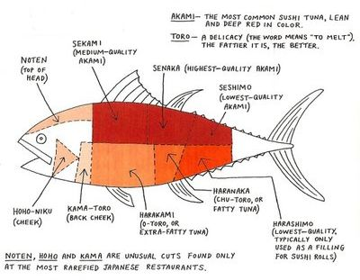 bluefin tuna sushi anatomy. How to ask for the more premium cuts of ahi tuna sushi.