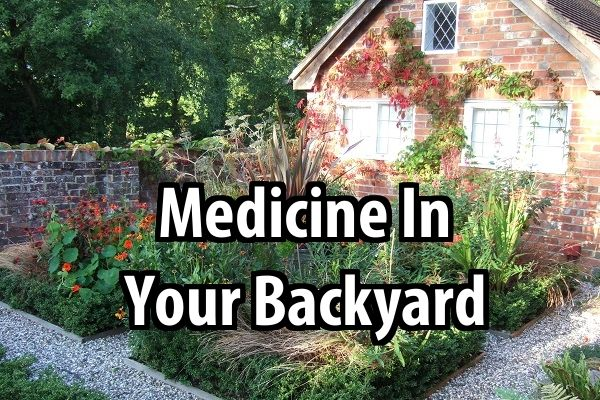 If you look, you could find medicine in your backyard. Practice identifying them now because there may come a time when you need them.