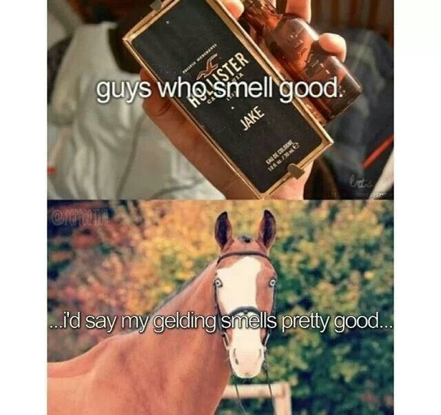 So many girls at school talk about the guys who smell good. I like the smell of horse!