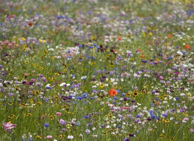 www.rustica.fr - Plus de fleurs, moins de gazon : le jardin gagnant  - 4 idées de massif.