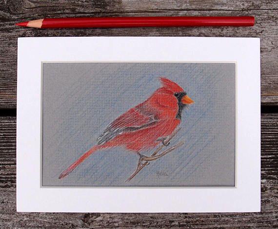 Male Northern Cardinal Original Colored Pencil Drawing  Bird
