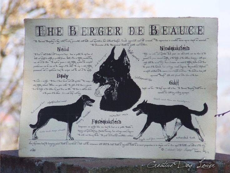 Antique styled dog standard - Berger de Beauce by Creativedoglover on Etsy