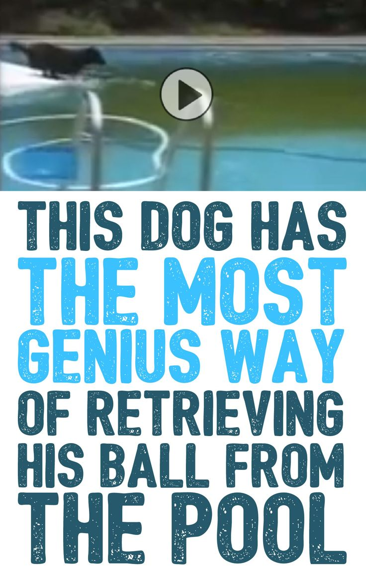 This dog has the most genius way of retrieving his ball from the pool!