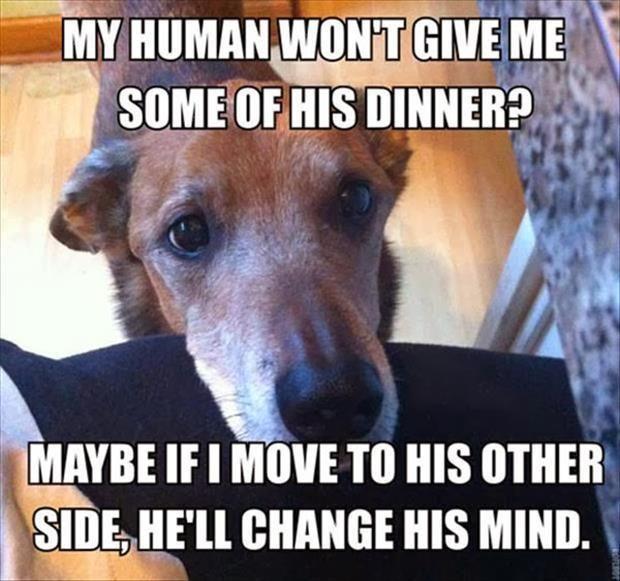 Woman Hot Dog Hookup Meme Mom Overload