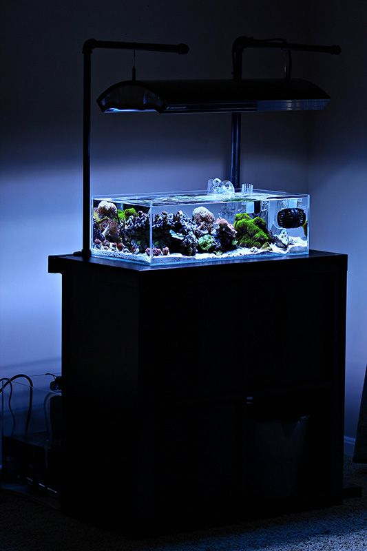 17 best images about fish tank on pinterest saltwater for Aquarium nano marin