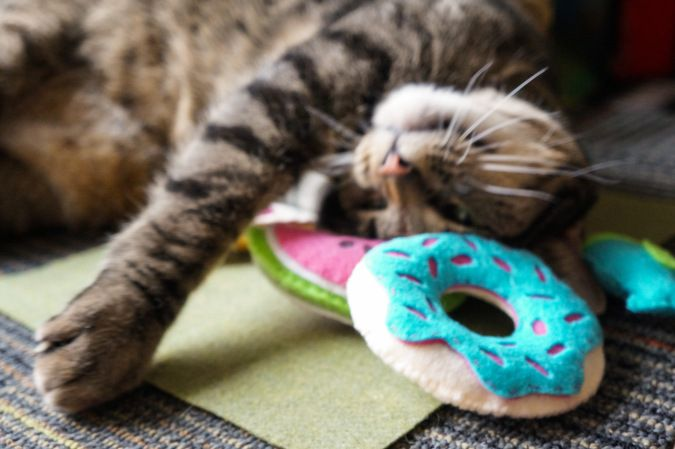 Diy Felt Cat Toys Donut Watermelon Pizza Shaped Catnip Embroidered Toys Adorable Craft To Share With Your Feline Friends Felt Cat Toys Felt Cat Cat Toys