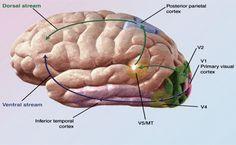 5 metode simple prin care ne putem menţine sănătatea creierului