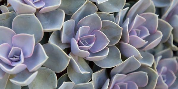 Piante grasse: le specie di cactus e piante succulente più facili da coltivare (FOTO)