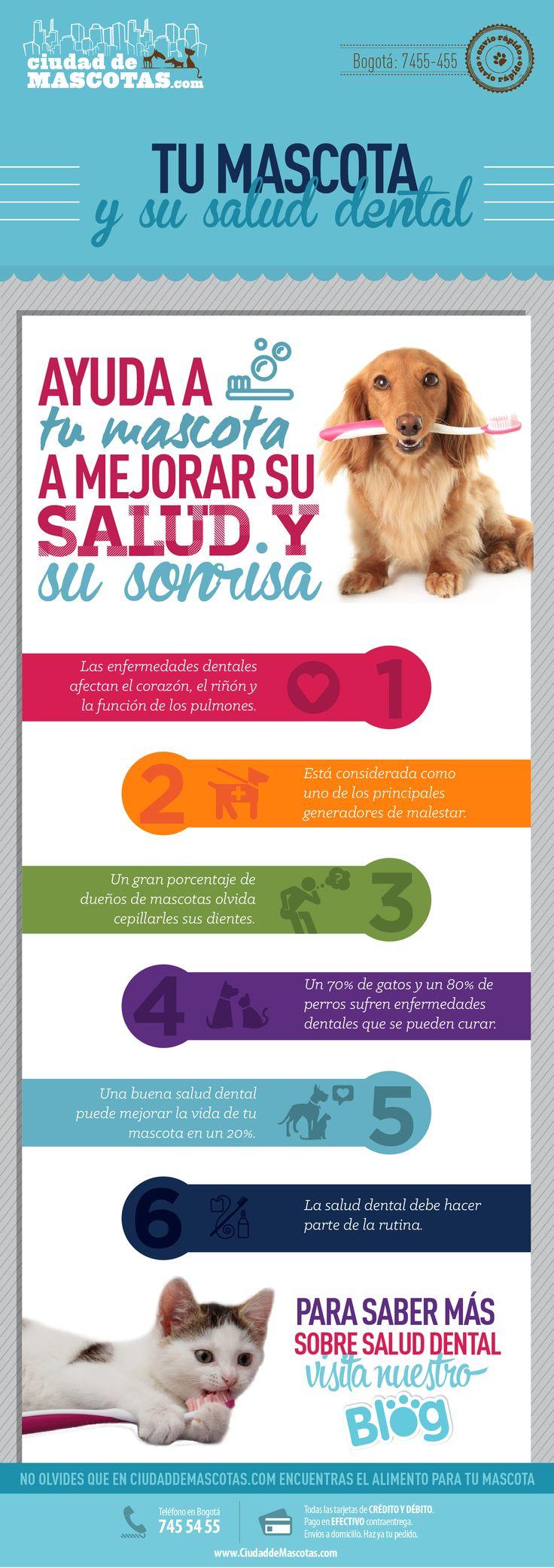 Cuidar los dientes de tus perros y tus gatos evita que tengan comportamientos negativos relacionados con su salud.