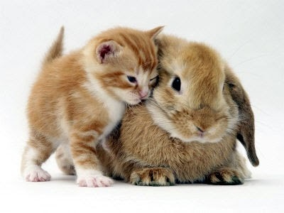 cats and bunnies