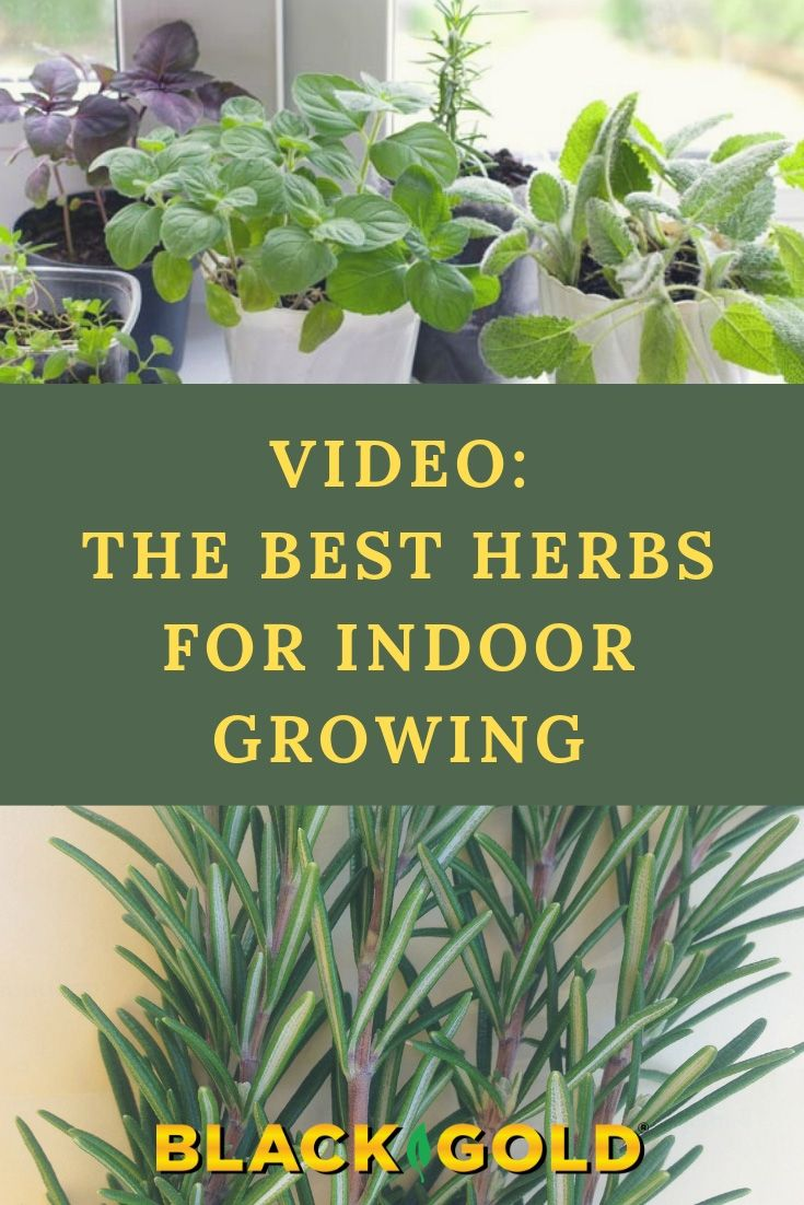 Fresh Herbs Taste Best For Home Cooking So Why Not Grow Your Own