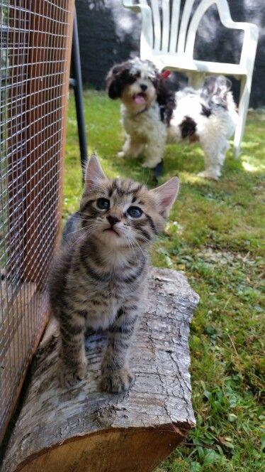 Sherry river kittens